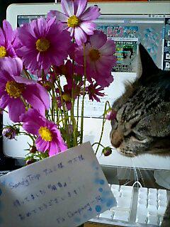 fsflower.jpg