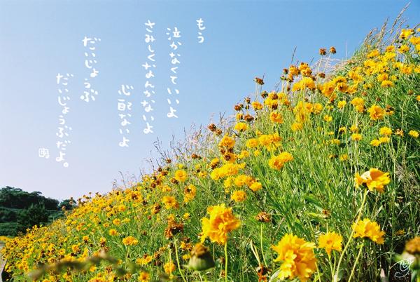 daijyoubu.jpg